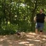 Vaddisznók támadtak kutyákra a miskolci lakótelep mellett