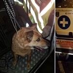 Új trend: idén vonaton menekültek a petárdától rettegő kutyák
