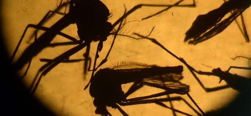 Újabb rémisztő felfedezés a zikavírusról
