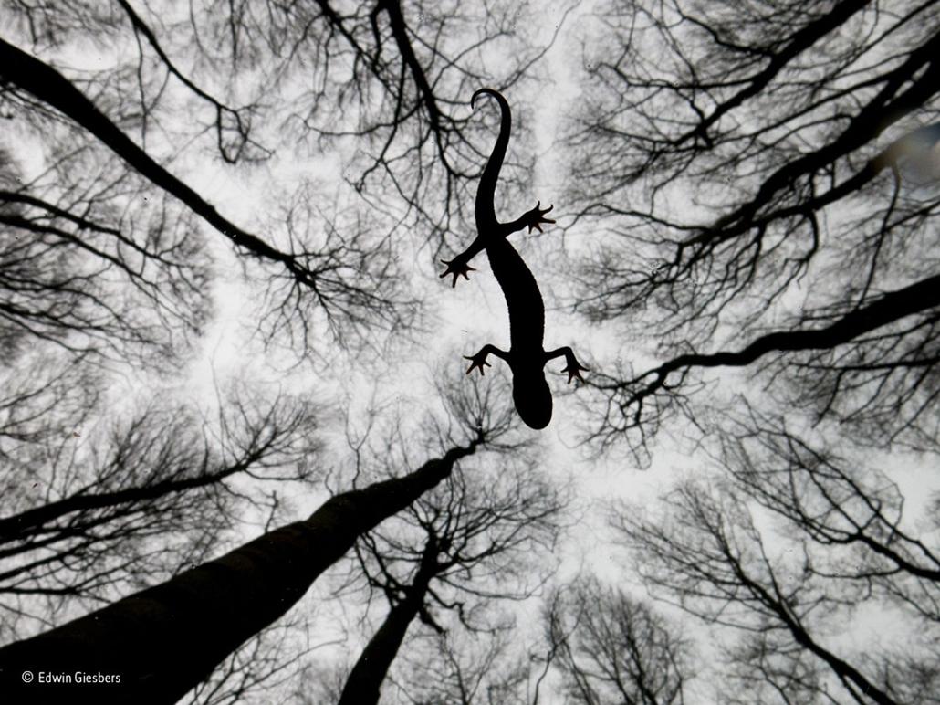 NE HASZNÁLD!!!!!!!!! - Wildlife Photographer of the Year, Edwin-Giesbers- Amphibians & Reptiles