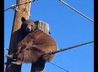 Villanypóznára mászott, még a kábelekre is ráült egy medve Arizonában