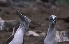 50 milliárdnál több madár élhet a világon, de a fajok több mint tizedéből 5 ezer példány sincsen