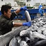 Honnan tudja, hogy nem Fukusimánál fogták a halat, amelyet karácsonyra vesz?