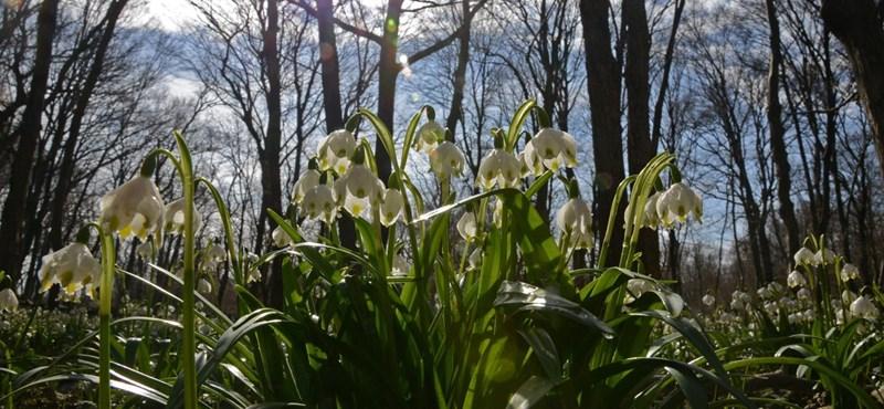 Kora tavasszal búcsúzik a február