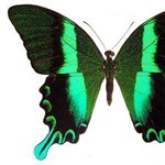 Útlevelek hamisításvédelmében segíthet a pillangó