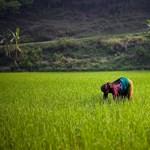 Már küldik a különleges rizstámogatást