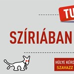 Mutatjuk, milyen plakátokkal jön a Kétfarkú Kutya Párt