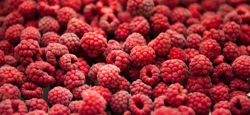 Tudod, mennyi gyümölcsöt és zöldséget kellene ennie naponta egy diáknak?