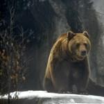 Nyugodtan kirándultak, és egyszer csak ott volt egy barnamedve