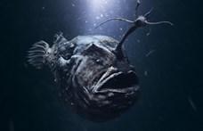 Ritkán látott, különös módon szaporodó mélytengeri élőlényt mosott partra a víz Kaliforniában