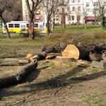 Kivágtak több fát a Tabánban