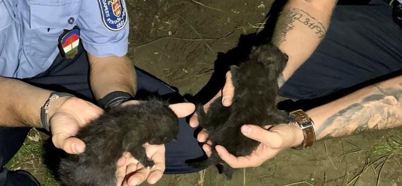 """""""Ez teljesen bevett szokás volt"""" – megszólalt a nő, aki élve ásott el három kismacskát"""
