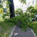 Fotó: A Vasúttörténeti Park közelében zúzott össze egy autót egy leszakadó faág