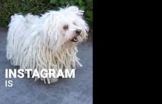 Mark Zuckerberg puli kutyája jelentette be az Instagram legújabb funkcióját