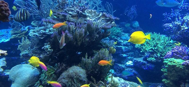 Nehéz földrajzi teszt: mennyire ismeritek a tengereket, óceánokat?