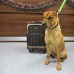 Bőröndjével kitett kutyáról terjed szomorú kép a neten - fotó