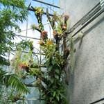 Trópusi növénykompozíció a fürdőszobába, egyszerűen!