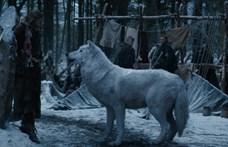 A Trónok harca óriásfarkasai csupán távoli rokonai a mai farkasoknak