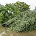 Siófokon kempingezőkre dőlt egy fa, öten megsérültek