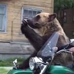 Robi, a medve most már a szabadság szimbóluma