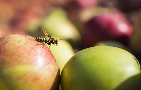 tárgyaló alma nő)