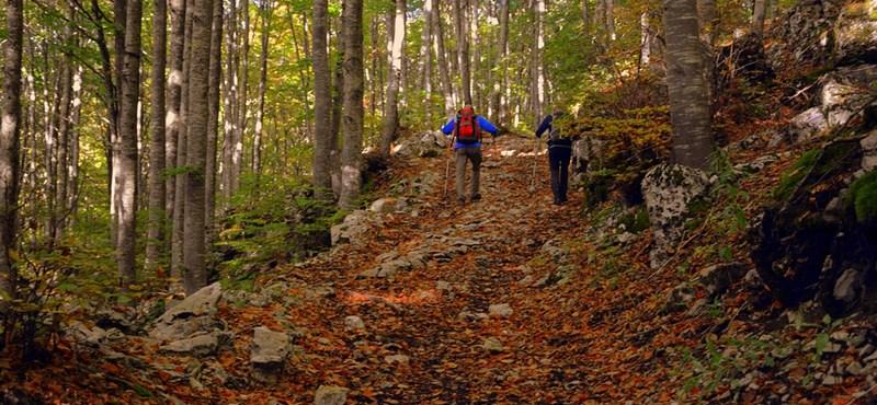 Programajánló a hétvégére: őszi séta és túrázás