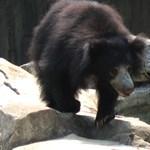 Három embert ölt meg egy medve