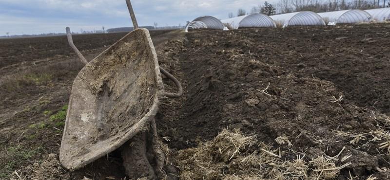 Cégtemetőnek tűnik, mégis újabb százmilliókat kap a lepukkant pusztaottlakai park