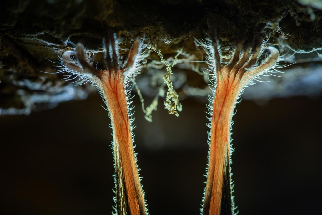 NE HASZNÁLD Varázslatos Magyarország természetfotó kiállítás Apró részletek - Duna–Ipoly Nemzeti Park ~ Sztrehárszki Lili