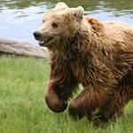 Iskolásokat féltenek a medvéktől Szlovákiában