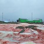 Vérvörösre színezte az antarktiszi jeget egy alga