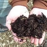 Hogyan lehet biokertünk? Növénytermesztés vegyszerek nélkül