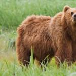 Figyeljetek, medvék! Ha Franciaországba jöttök, nem vehetitek el a birkáinkat!