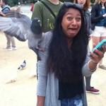 Fotók: Világbajnok mém lett a galamb által megtámadott nő arcából