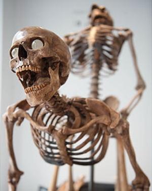 7b96c67fa4 Kult: Így csináljuk majd halálunk után: szexelő csontvázak a ...