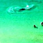 Videó: Lassan fogták csak fel, hogy cápa vadászik mellettük