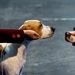 Júliustól kötelezően mikrochipet kapnak a kutyák