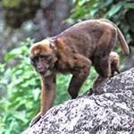 Nem jó most fukusimai majomnak lenni