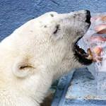 Így bírják ki a hőséget az állatkertekben - Nagyítás