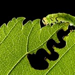 Ejtőernyős hangyák, pillangócsokor és Kiskunság a legjobb uniós természetfotókon