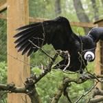 Átadták a Nyíregyházi Állatpark Dél-Amerika állatvilágát bemutató új látványosságát