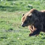 Medve hozhatta a frászt egy horgászra Egerszalóknál