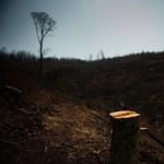 Magyarország a 109. legkockázatosabb természeti hely a világon