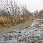 Telelési időszakban kotorják az iszapot Tokajban, sok állat pusztult el