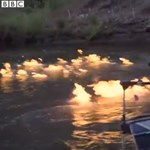 Videó: Felgyújtotta a folyót a zöldpárti politikus