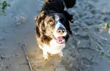 Az ELTE kutatói megvizsgálták, hány éves korukban milyenek a kutyák