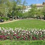 A három legjobb szabadtéri tanulóhely Budapesten - a mi kedvenceink