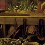 Varázslatos jeleneteket mutattak meg az új Harry Potter-filmből