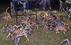 Óriásrákok rohantak le egy családi grillpartit Ausztráliában