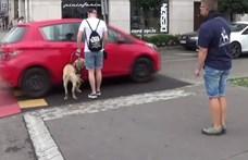 Vakvezető kutyából is hiány van